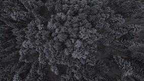 Воздушный отснятый видеоматериал леса 4k рождества снега зимы coniferous акции видеоматериалы
