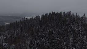 Воздушный отснятый видеоматериал леса 4k рождества снега зимы coniferous сток-видео