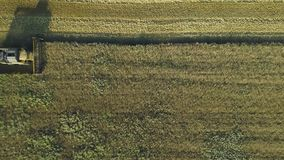 Воздушный отснятый видеоматериал трутня Взгляд сверху все еще снял жатки комбайна собирает пшеницу Сбор поля зерна r сток-видео