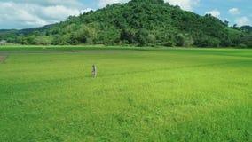 воздушный отснятый видеоматериал трутня 4K белокурой девушки в платье идя вдоль полей риса в El Nido, Филиппинах видеоматериал