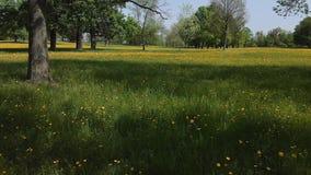 Воздушный парк Штутгарт города съемки, красивые деревья, луг с цветками сток-видео