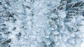 Воздушный полет над лесом ели зимы снежным снизу вверх стоковые фотографии rf