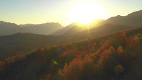 Воздушный фильм трутня 4k леса осени в светах захода солнца сток-видео