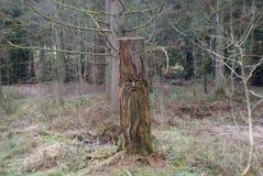 Возможно высекать лесного дерева Стоковое Изображение