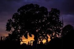 Возможно centennial дуб Стоковые Изображения RF
