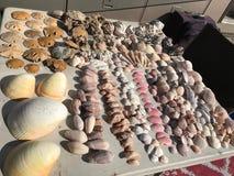 Вознаграждения дня приставают расчесывать к берегу на море Cortez стоковое фото