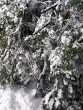 Воздуходувки снега Стоковые Фото