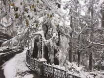 Воздуходувки снега Стоковое Фото