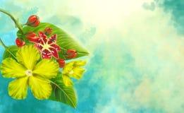 Воздух Simpoh (Dillenia Suffruticosa) Стоковые Фото