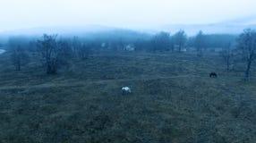 Воздушная сцена деревни леса акции видеоматериалы