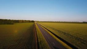 Воздушная съемка Белый автомобиль управляет над пустой проселочной дорогой в вечере лета между желтыми и зелеными полями сток-видео