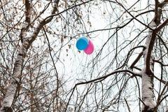 2 воздушного шара в ветвях деревьев в зиме Стоковые Изображения RF