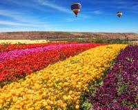 2 воздушного шара летают Стоковая Фотография RF