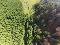 воздушное фото пущи Стоковые Изображения RF