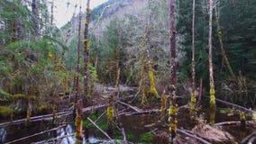 Воздушные леса горы съемки сток-видео
