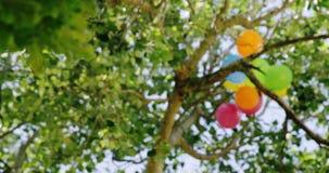 Воздушные шары в дереве сток-видео