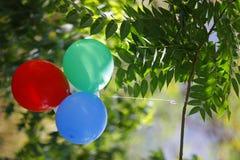 Воздушные шары в саде в руках ` s девушки в саде Стоковая Фотография RF