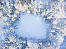 Воздушный лес зимы стоковые изображения rf