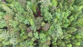 Воздушный лес сверху видеоматериал