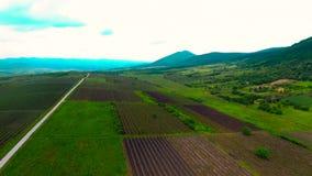 Воздушный лоток над полями виноградины акции видеоматериалы