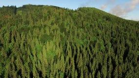 Воздушный отснятый видеоматериал над северным европейским трутнем леса снял зеленых деревьев в 4K акции видеоматериалы