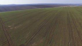 Воздушный отснятый видеоматериал трактора брызгает поле рапса с химикатами в 4K сток-видео