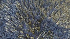 Воздушный снег покрыл деревья Туризм белизны перемещения леса природы зимы ландшафта сток-видео