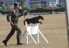 Воинская собака стоковые фотографии rf
