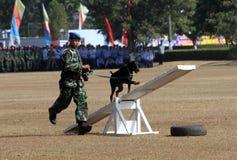 Воинская собака стоковое изображение rf