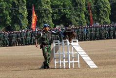 Воинская собака стоковое изображение