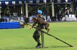 Воинская тренировка собаки Стоковое фото RF