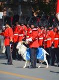 воин парада Стоковые Изображения RF