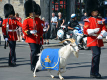 воин парада Стоковое Фото