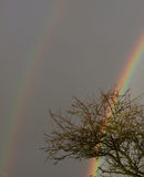 двойная радуга Стоковые Изображения
