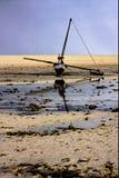 двойник в Мадагаскаре стоковое фото