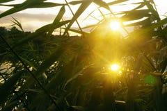двойной заход солнца Стоковое Фото