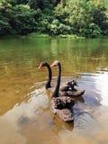 двойные лебеди Стоковое Изображение RF
