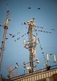 вокруг башни радиосвязи птиц Стоковые Изображения