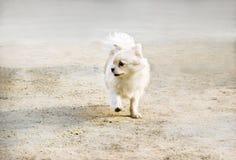 вокруг гулять щенка Стоковая Фотография