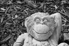 вокруг обезьяны Стоковое Изображение RF