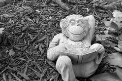 вокруг обезьяны Стоковая Фотография RF