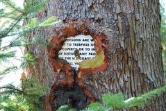 вокруг охваывать растущий ствол дерева sig металла Стоковые Фото