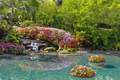 вокруг пруда цветков Стоковая Фотография RF