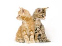 вокруг смотреть котят Стоковые Фотографии RF