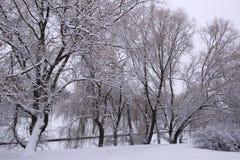 Вокруг снега Стоковая Фотография RF