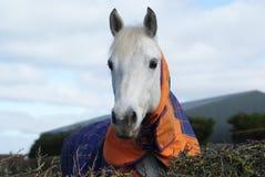 вокруг horsing Стоковые Изображения RF