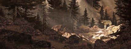 волк в верхней части потока Стоковое фото RF