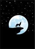 волк завывать Стоковые Фотографии RF