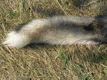 волк кабеля s Стоковые Фотографии RF