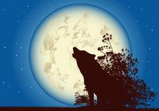 волк луны Стоковое Изображение